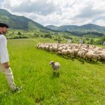 Redik, redikanie je pradávna tradícia opakujúca sa každoročne v jarnom období - je to vyháňanie oviec a dobytka na pastviny. Bača s valachmi odchádzali po zime z dediny na salaš, brali so sebou všetko, čo potrebovali od jari až do jesene. Sťahovanie riadu a začatie novej salašníckej sezóny bolo sprevádzané viacerými zvykmi.
