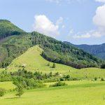 Borová, chránené vtáčie územie, územie NATURA 2000, ochranné pásmo Národného parku Malá Fatra, s výskytom až 9 rastlín z čeľade orchideí, ktoré sa tu zachovali a zachovávajú aj vďaka paseniu oviec. V pozadí vrchol Suchý - začiatok hlavného hrebeňa Krivánskej Malej Fatry, v okolí ktorého bolo v minulosti viac ako 20 vysokohorských salašov.
